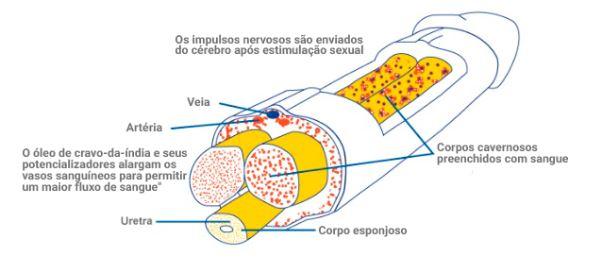 produto para aumentar o pênis